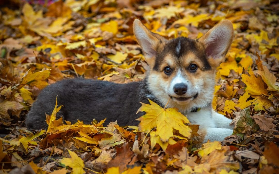 Fall Updates from Green Valley Veterinary Care